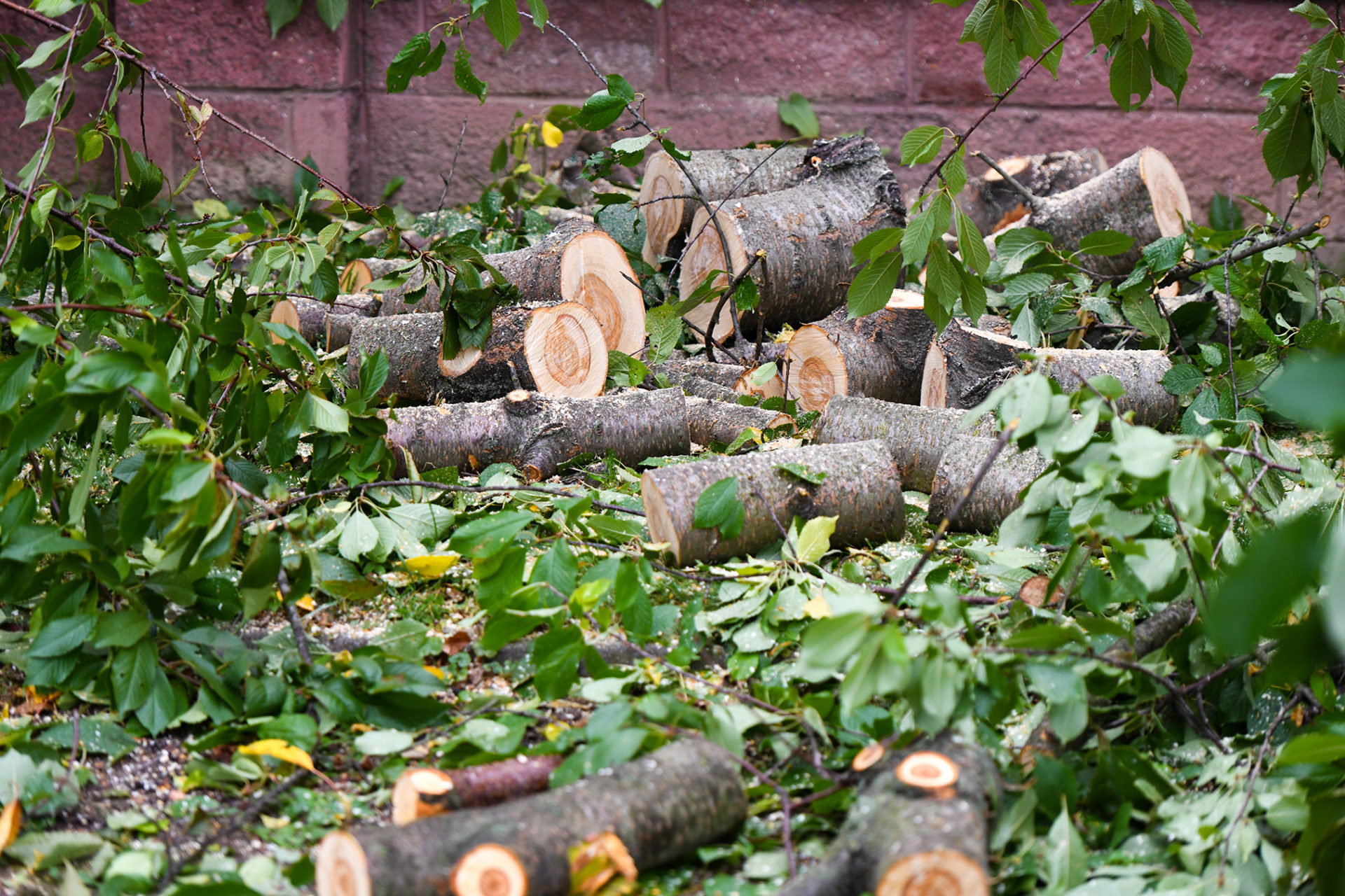 Lancaster Attorney Shares Logging and Forestry Workplace Hazards